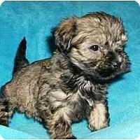 Adopt A Pet :: Duffy - Mooy, AL