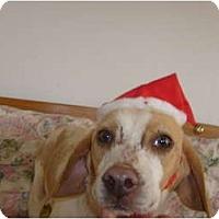 Adopt A Pet :: Delilah - Eden, NC