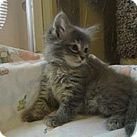 Adopt A Pet :: Lexi - Richland, MI