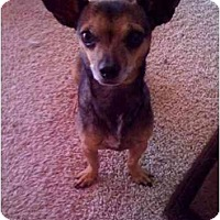 Adopt A Pet :: Little Mama 2 - Fowler, CA