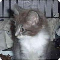 Adopt A Pet :: Helen - Davis, CA