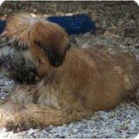 Adopt A Pet :: Brady - Antioch, IL