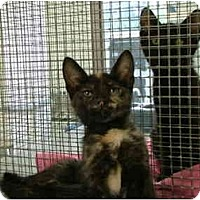 Adopt A Pet :: Anna - Winter Haven, FL