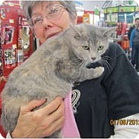 Adopt A Pet :: Ms. Holly - Sterling Hgts, MI