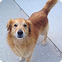 Adopt A Pet :: Maxwell - Foster, RI