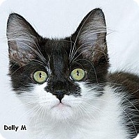 Adopt A Pet :: Dolly M - Sacramento, CA