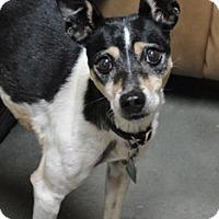Adopt A Pet :: Kassie - Meridian, ID