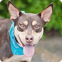 Adopt A Pet :: Hummer - Kingwood, TX