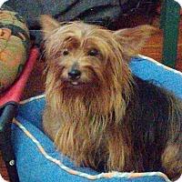 Adopt A Pet :: Leela  ( OH ) - Akron, OH