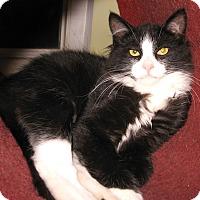 Adopt A Pet :: Jeremy - Colmar, PA