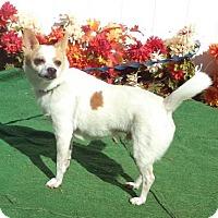 Adopt A Pet :: Curious George - Lebanon, ME