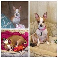 Adopt A Pet :: Socks IN CT - East Hartford, CT