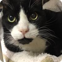 Adopt A Pet :: Trevor - Medina, OH