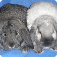 Adopt A Pet :: Talula - Woburn, MA
