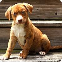 Adopt A Pet :: Lula~adopted! - Glastonbury, CT