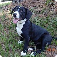 Adopt A Pet :: Jack - Bozrah, CT