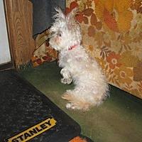 Adopt A Pet :: Bugle Boy aka Boo - Dodge City, KS