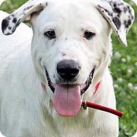 Adopt A Pet :: Beethoven - new! - Beacon, NY