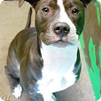 Adopt A Pet :: Estee - Redding, CA