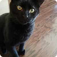 Adopt A Pet :: Steven - Morristown, NJ