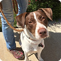 Adopt A Pet :: Sallie - Van Alstyne, TX