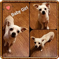 Chihuahua Mix Dog for adoption in Mooresville, North Carolina - Baby Girl