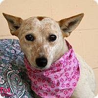 Adopt A Pet :: TOT - Santa Maria, CA