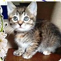 Adopt A Pet :: Jackson - Orange, CA