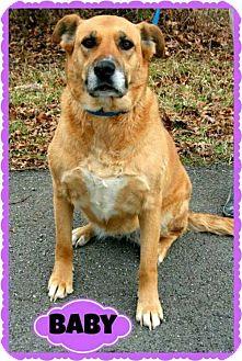 Shepherd (Unknown Type)/Labrador Retriever Mix Dog for adoption in Marion, Kentucky - Baby II