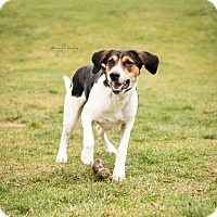 Adopt A Pet :: Buford - Eighty Four, PA