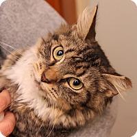 Adopt A Pet :: Ava - Brimfield, MA