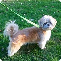 Adopt A Pet :: Lionel - Birmingham, AL