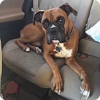 Adopt A Pet :: Kyle - Burbank, CA