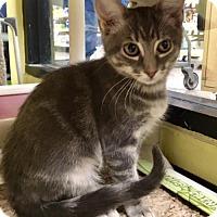 Adopt A Pet :: Tuesday - Long Beach, CA