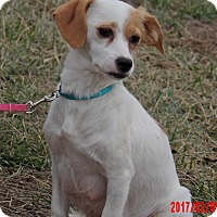 Adopt A Pet :: Pearl (15 lb) Pure Sweetness - West Sand Lake, NY