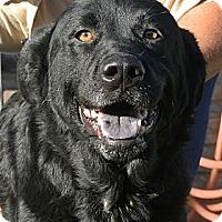 Adopt A Pet :: Jackie - white settlment, TX