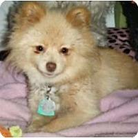 Adopt A Pet :: Tony - Mooy, AL