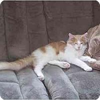 Adopt A Pet :: Hansel - Summerville, SC