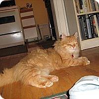 Adopt A Pet :: Chester - Toronto, ON