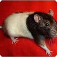 Adopt A Pet :: Linnie - Winner, SD