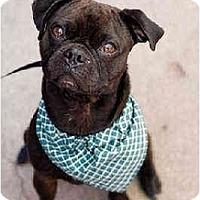 Adopt A Pet :: Stan - Portland, OR