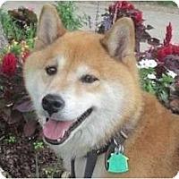 Adopt A Pet :: Haku (Oklahoma) - Round Lake, IL