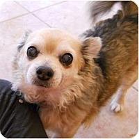 Adopt A Pet :: Taco - dewey, AZ