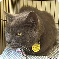 Adopt A Pet :: Zelda - Hudson, NY