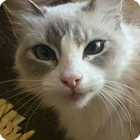 Adopt A Pet :: Cinderella - Ennis, TX