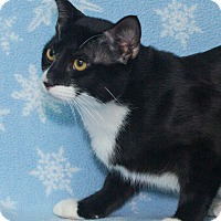 Adopt A Pet :: Domino - Elmwood Park, NJ
