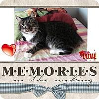 Adopt A Pet :: Sandi - Harrisburg, NC