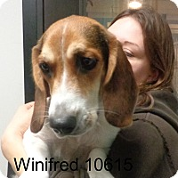 Adopt A Pet :: Winifred - baltimore, MD