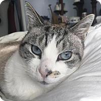 Adopt A Pet :: Lexie - Alameda, CA