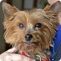 Adopt A Pet :: Jill - Meridian, ID